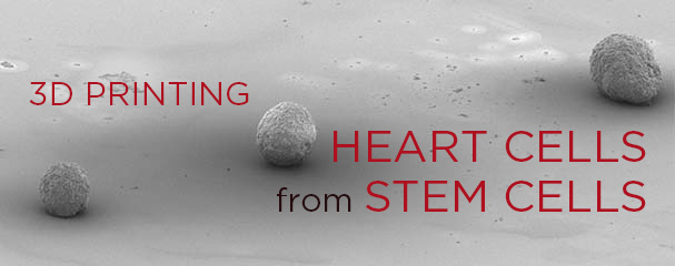 SUTD Researchers Create Heart Cells from Stem Cells using 3D Printing